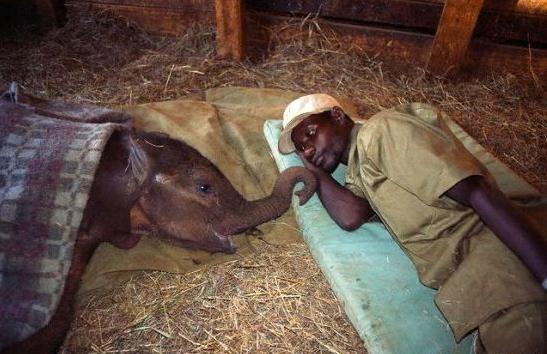 Man & Baby Elephant
