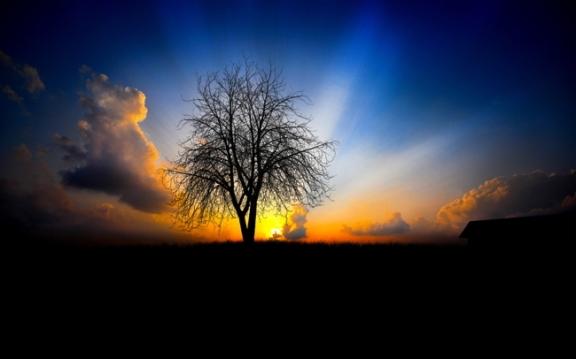The Dawn of Awakening