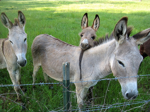 Sweet Donkey Faces