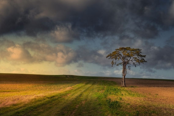 Lone Tree at Sunset with Stormy Sky