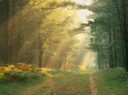 Sun Rays in the Forest, Germany