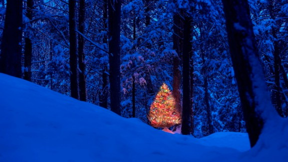 Lit Christmas Tree in Forest Cover Image
