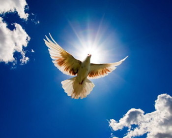 Dove & Peace 2
