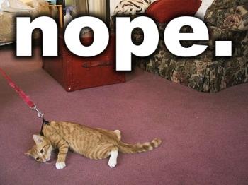 Nope - Cat Resisting