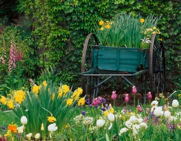 Lovely Garden and Wheelbarrow