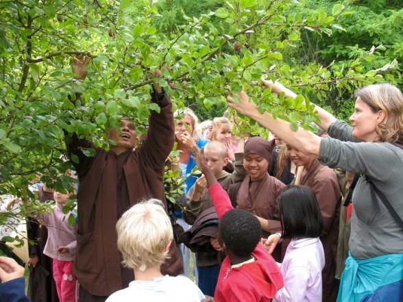 Thich Nhat Hanh getting fruit